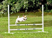 Competition Adjustable Dog Agility Jump (Fixed Base, White)