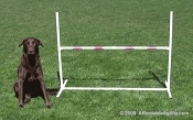 Economy Adjustable Agility Dog  Jump Free Tape Included