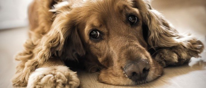 How to Tell when a Dog is Upset, Stressed, or Scared