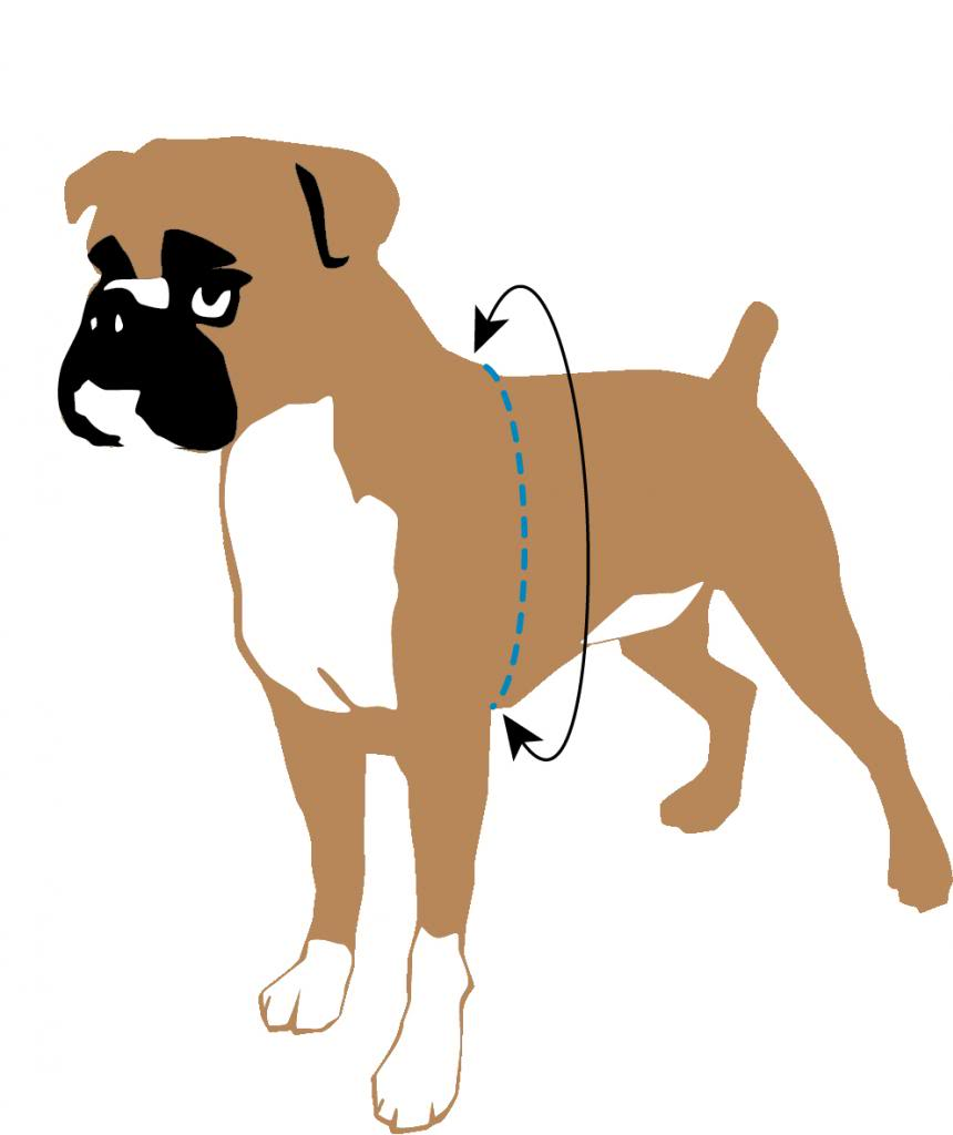 how to put on 2 hounds design harness