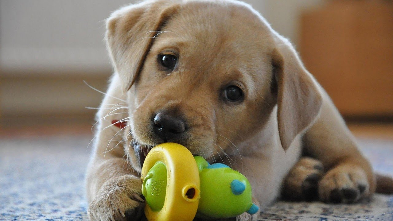Great Dog Toys for your Best Friend