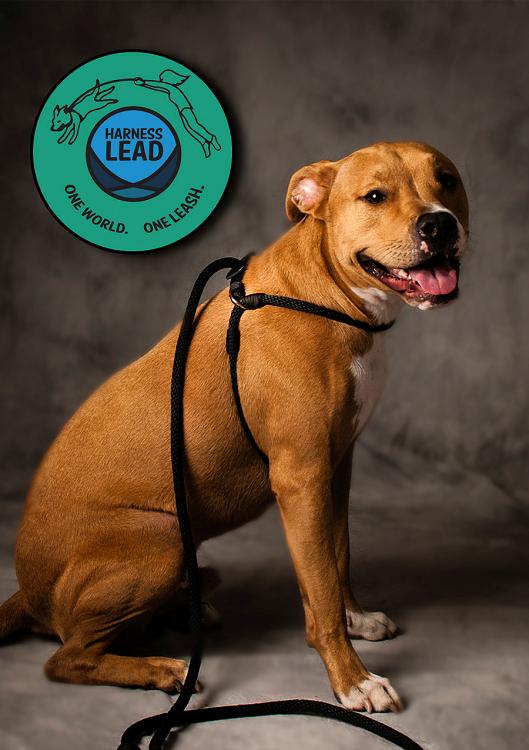 Harness Lead Escape Resistant