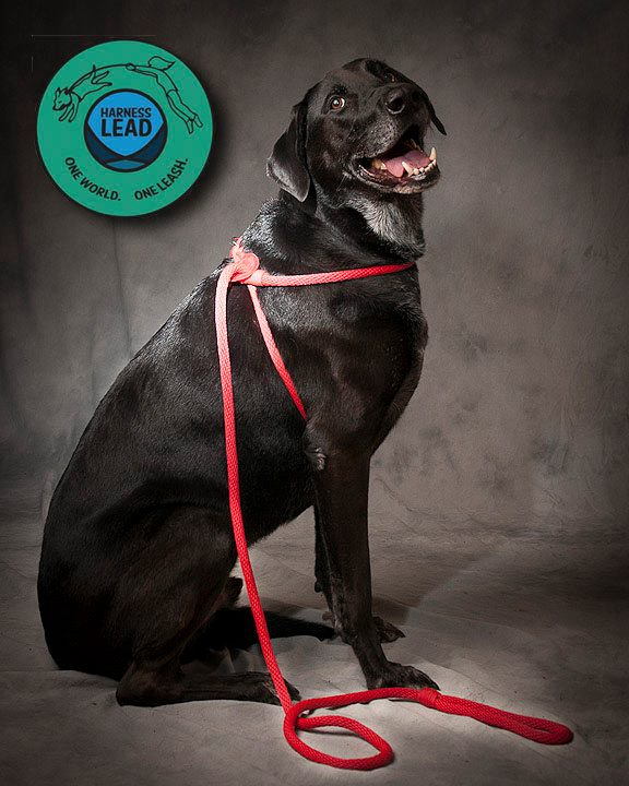 Harness Lead Anti-Pull All in One