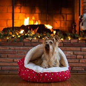 Holiday Cozy Cave Dog Bed