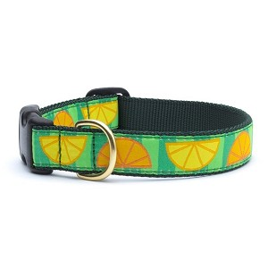 Up Country Summer Citrus Dog Collar