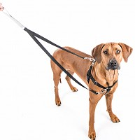 Freedom No Pull Dog Harness & Leash Training Package
