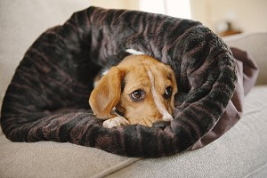 Snuggle Sack Dog Bed Sleeping Bag PLAY